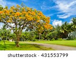 Orange Flowers Tree In Public...