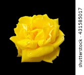 Yellow Rose Isolated On Black...