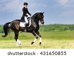 Dressage Rider On Bay Horse...