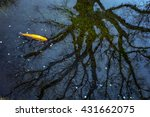 Coin And Tree Root In Lake