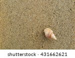 fossil shell on the sand beach | Shutterstock . vector #431662621