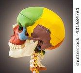 anatomical dummy skull | Shutterstock . vector #431684761
