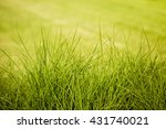 Leaves Of Green Grass On A...
