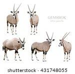 gemsbok or oryx gazella... | Shutterstock . vector #431748055