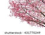 full bloom sakura flower tree... | Shutterstock . vector #431770249
