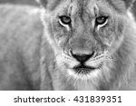 A Black And White Portrait Of ...