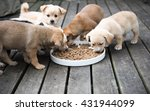 Stock photo terrier mix puppies eating from communal bowl outside on wooden deck 431944099