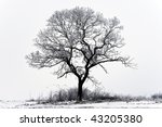 Single Tree In The Snowy...