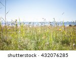 Seaside Meadow On A Sunny Day