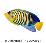 Tropical Fish  Regal Angelfish...