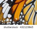 Macro Butterfly Wing Backgroun...