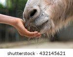 Child Feeding Donkey. Children...