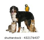 Stock photo group of pets isolated on white 432176437