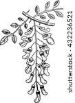 robinia pseudoacacia | Shutterstock .eps vector #432236521