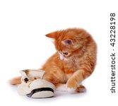 Cute Little Red Kitten Playing...