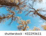look up of trees in forest at... | Shutterstock . vector #432293611