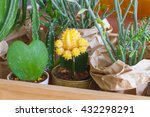 Yellow Cactus In Pot With...