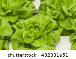 vegetables and hydroponics... | Shutterstock . vector #432331651