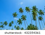 Palm Trees Over Blue Sky...