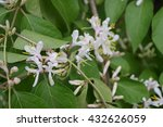 tiny flower buds in natural...   Shutterstock . vector #432626059