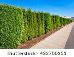 Long Green Hedge Along Concret...