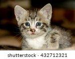 cute little kitten of grey... | Shutterstock . vector #432712321