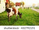 the cow eats the grass going... | Shutterstock . vector #432792151
