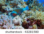 parrotfish  on the coral reef | Shutterstock . vector #43281580