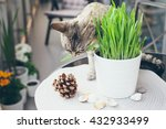 Pet Grass  Cat Grass. Cat Is...