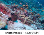 the giant moray  gymnothorax... | Shutterstock . vector #43293934
