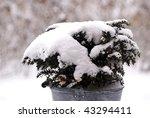 Galvanized Bucket With Snow...