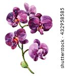 Watercolor Purple Orchid...