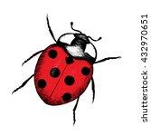 Ladybug Hand Drawn Vector...