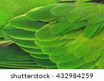 beautiful parrot feathers | Shutterstock . vector #432984259