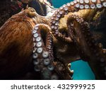 octopus close up | Shutterstock . vector #432999925
