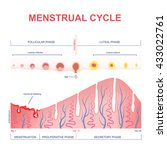 scheme of the menstrual cycle ... | Shutterstock .eps vector #433022761