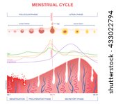 scheme of the menstrual cycle ... | Shutterstock .eps vector #433022794