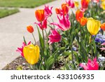 Colorful Tulips Blossoming Nea...