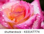 Colorful  Beautiful  Delicate...