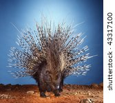 porcupine displaying its quills | Shutterstock . vector #43317100