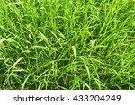 Long Green Grass Top View...