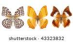 butterfly   Shutterstock . vector #43323832