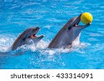 A Cute Dolphins During A Speec...