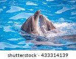 a cute dolphins during a speech ... | Shutterstock . vector #433314139