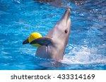 a cute dolphins during a speech ... | Shutterstock . vector #433314169