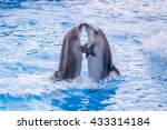 Stock photo a cute dolphins during a speech at the dolphinarium 433314184