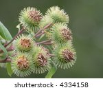 Bush Of A Burdock As A Symbol...