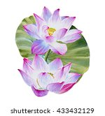 Water Lily Or Lotus Flower Wit...