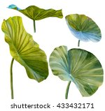 Water Lily Leaf Or Lotus Leaf....