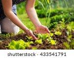 close up of a woman hands... | Shutterstock . vector #433541791